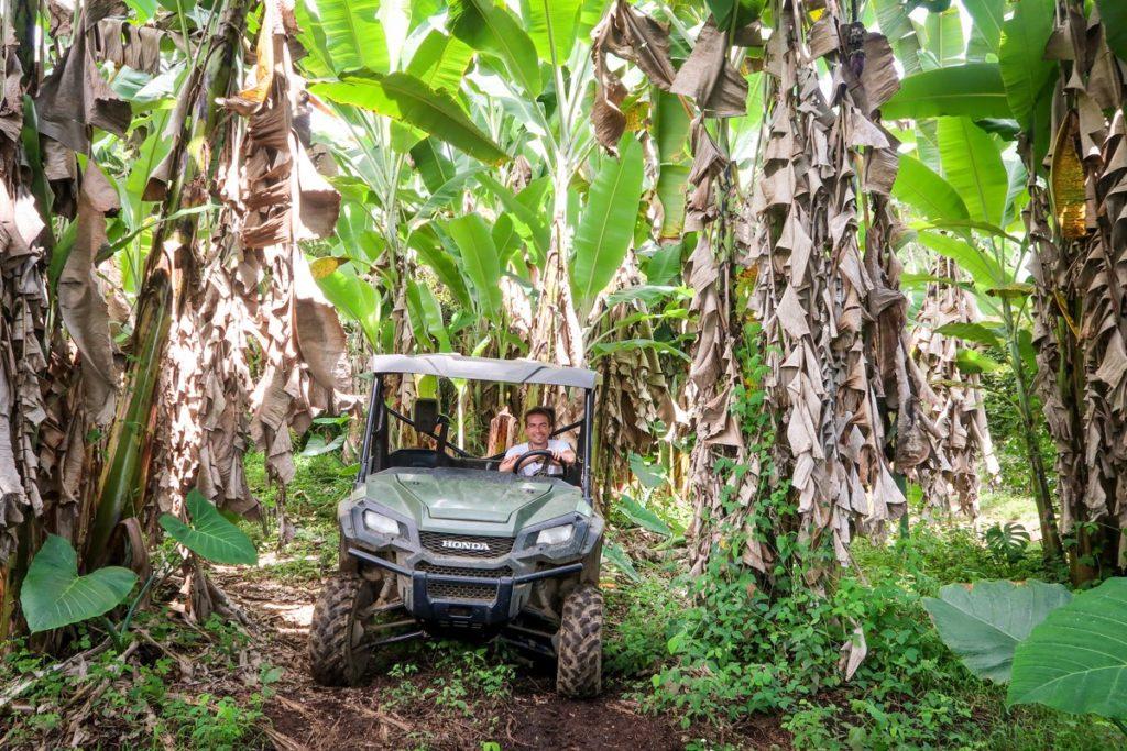 Na plantáž jezdíme jeepkem,