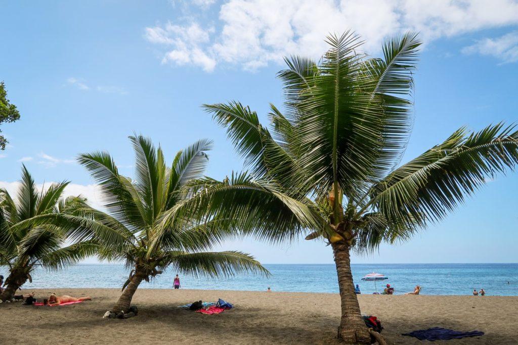 Kokosové palmy na pláži Ho'okena